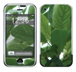 Apple iPhone Skin :: Summer Leaves