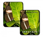 HP Touch Pad Skin :: Butterfly 1